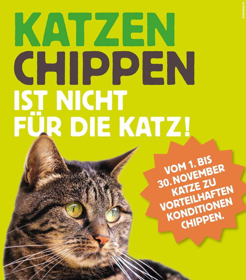 Katzenchip-Aktionjpg