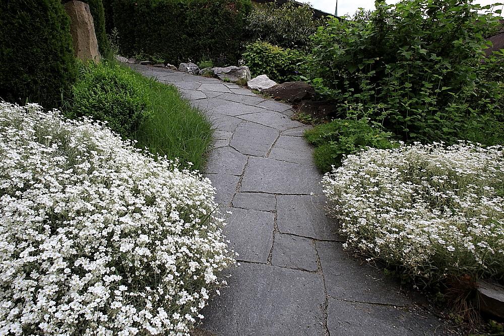 Garten steinplatten - Steinfliesen terrasse reinigen ...